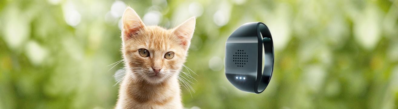 Переводчик с кошачьего – это реально